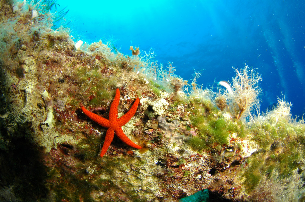Sea Star Diving